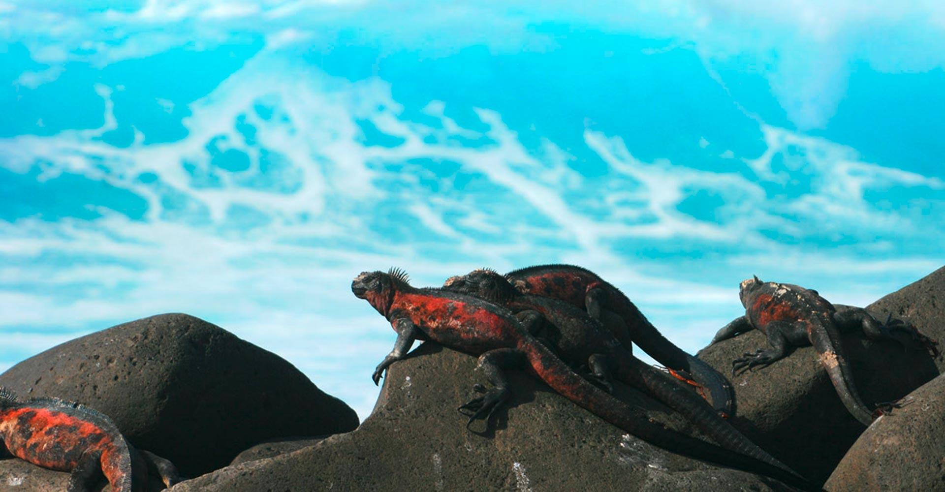 Ecuador, Galapagos, Meerechsen, Latin America Tours, Reisen