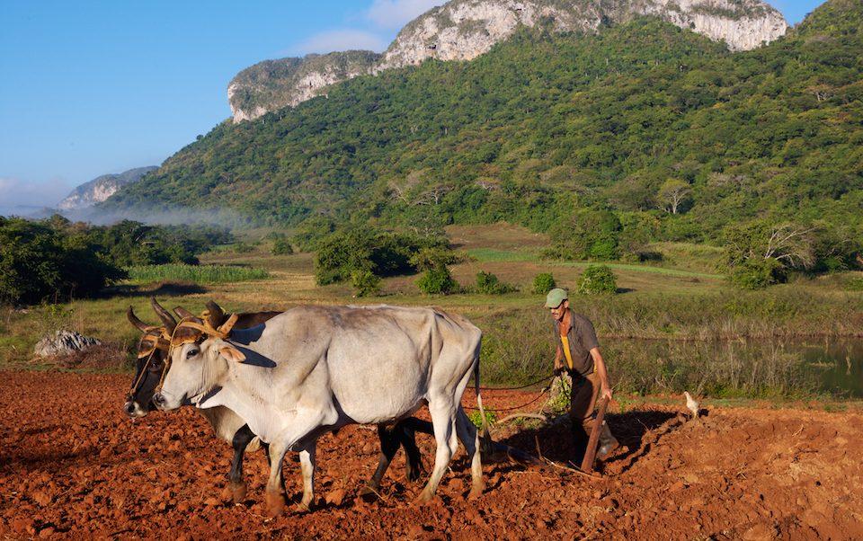 Kuba_Cuba_Westen_Vinales Tal_Bauern_Tabak_Ochsenkarren_Reisen