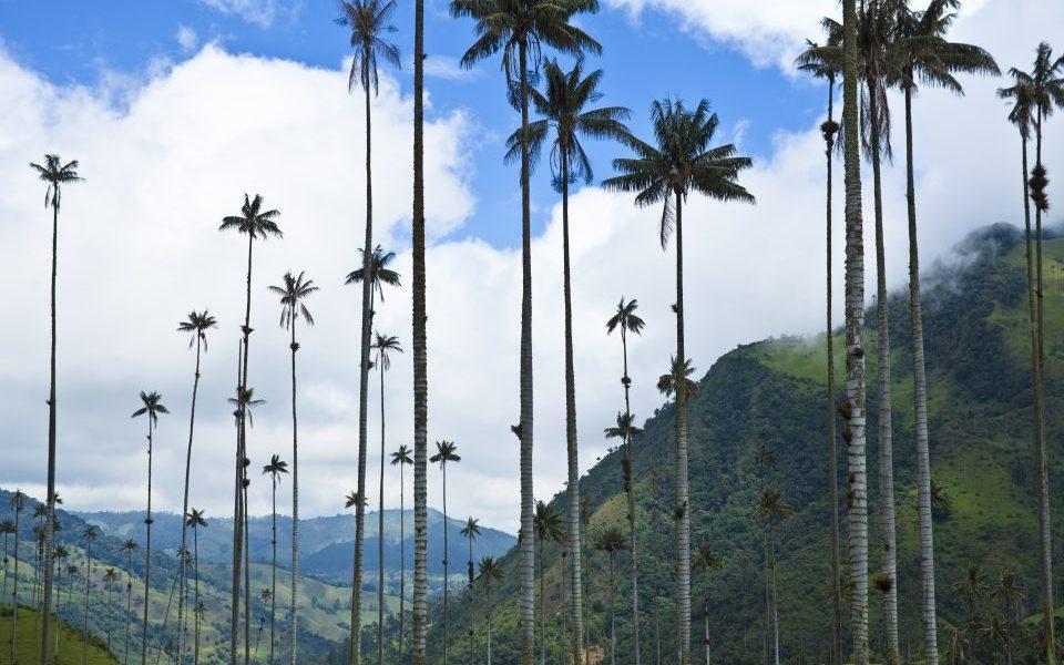 Kolumbien_Kaffeezone_Landschaft mit Huegeln und Palmen_Reisen