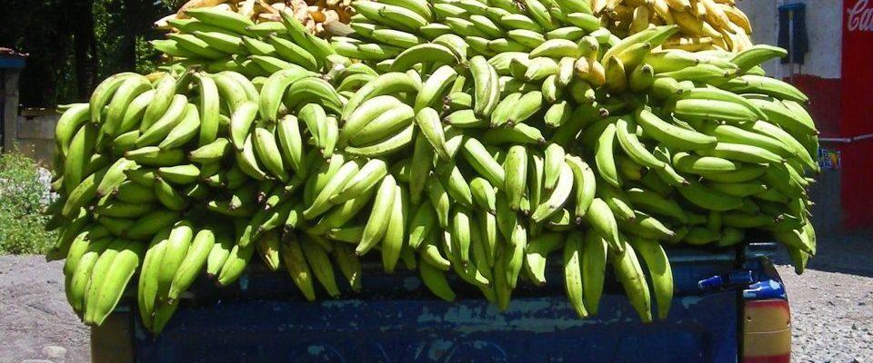 Panama_Bananen Transport_Reisen