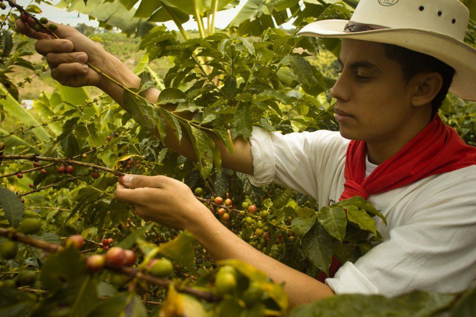Kolumbien_Kaffee_Kaffepfluecker_Reisen