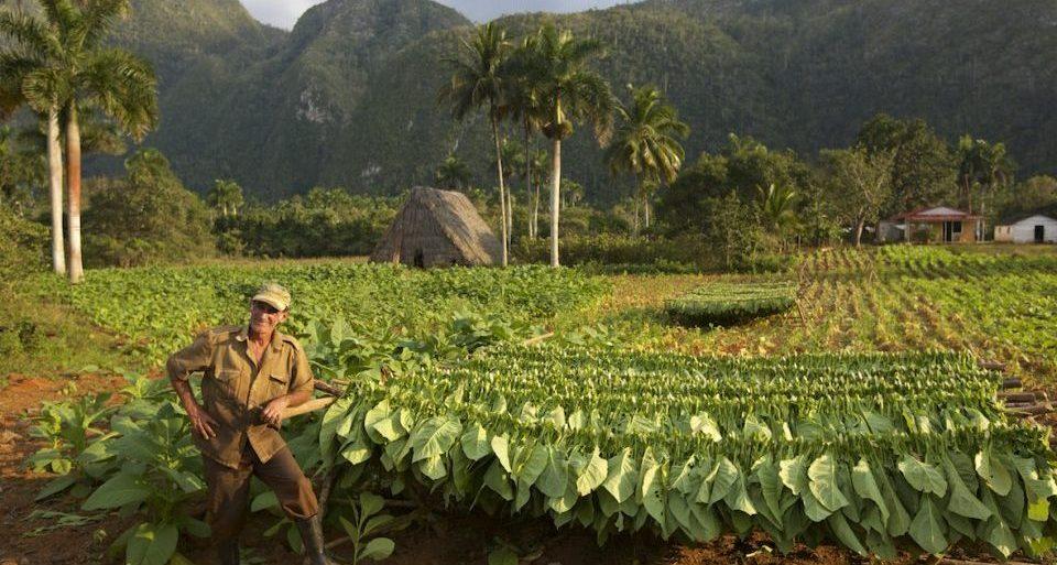 Kuba, Reise, Tabakbauer, Tabakplantage, Rundreise in Kuba