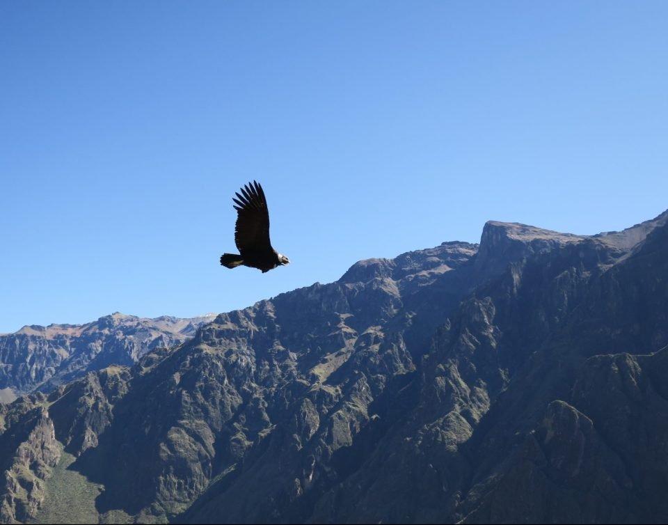 Peru, Anden, Adler über den Bergen, Latin Ameria Tours, Reisen