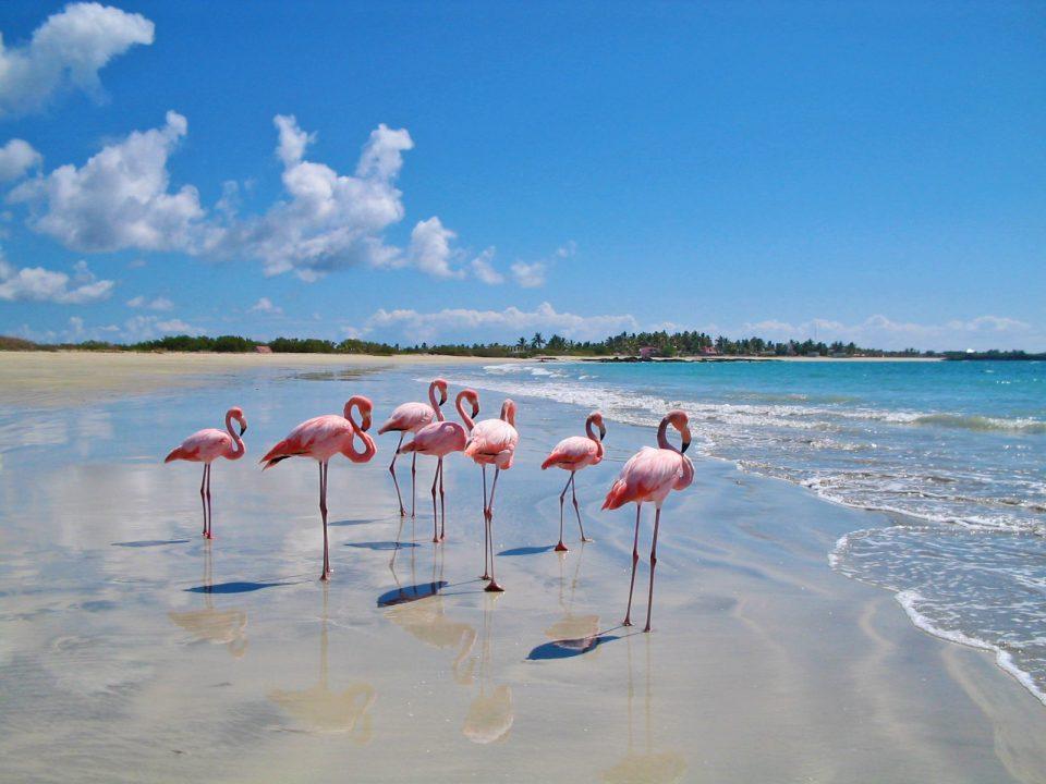 Ecuador, Galapagos, Flamingos am Strand, Latin America Tours, Reisen