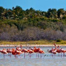 Dominikanische Republik, Flamingos in der Laguna de Oviedo, Barahona Dom Rep Südwesten, Latin America Tours