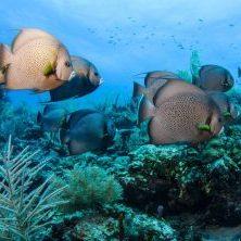 Belize, Unterwasserwelt, Fische, Schnorcheln am Riff, Latin America Tours, Reisen