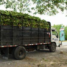Panama, Lastwagen mit Bananen, Latin America Tours, Reisen