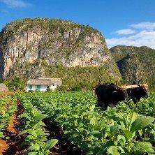 Vinales Tal, Tabakfelder, Kuba, Latin America Tours, Reisen